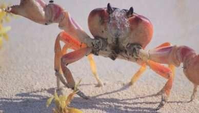 crab importance